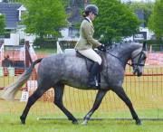 WH pony