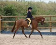 sale pony irland
