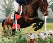 Junior Event Horse